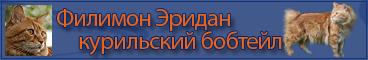 кот курильского бобтейла филимон эридан